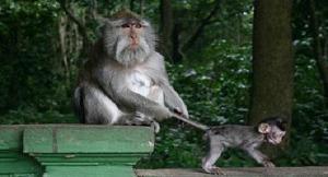 ubud-mongkey-forest-bali-golden-tour